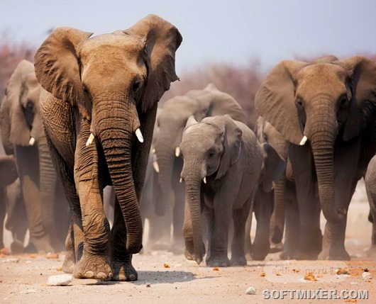 Животные, способные захватить мир