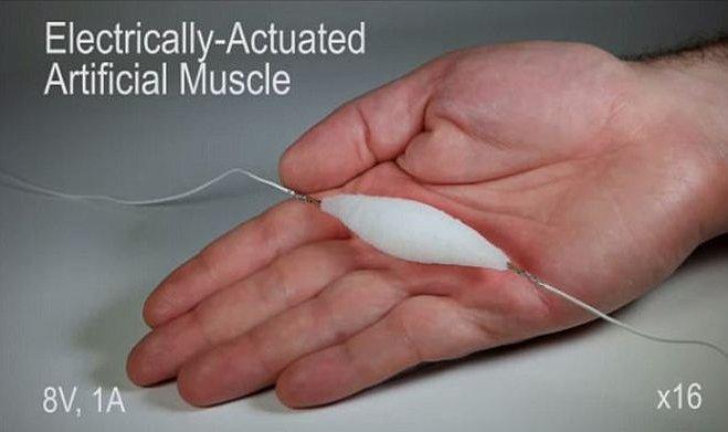 Напечатанные на 3D-принтере синтетические мышцы в три раза сильнее человеческих