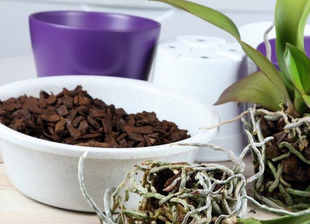 Пересадка фаленопсиса в домашних условиях – пошаговая инструкция