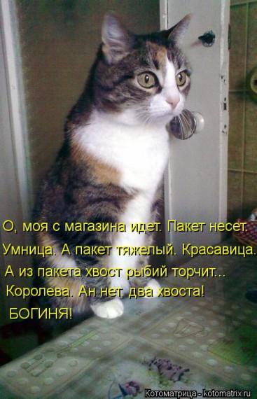 1359322114_1359093514_kotomatw (367x570, 65Kb)