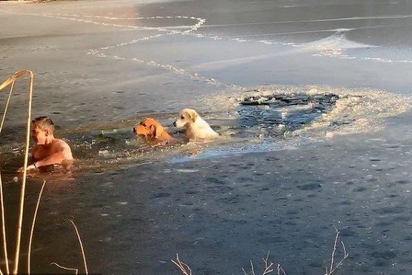 США покорил сибиряк, спасший двух собак из «ледяной ловушки» в Нью-Йорке