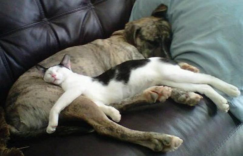 cats 23 25 кошачьих поз для сна