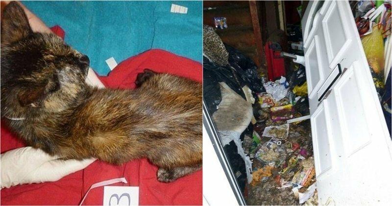 Британскую кошатницу отправили в тюрьму и пожизненно запретили ей держать животных после увиденного (7 фото)