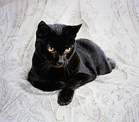 Кошки и Котята 13