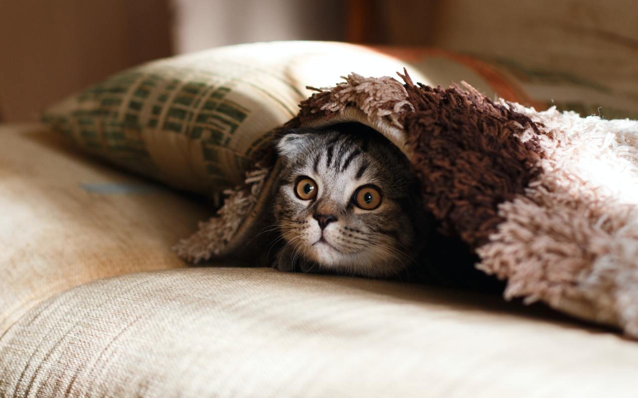 Кошки, любовь моя