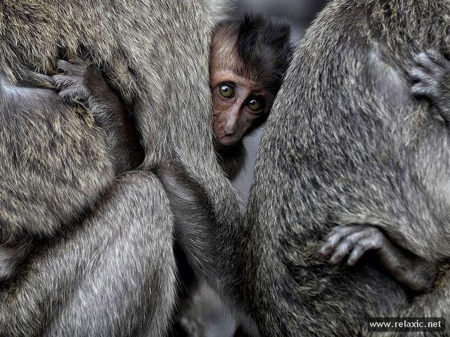 32 лучших фото июня-2012 от канала National Geographic