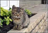 Кошки и Котята 7