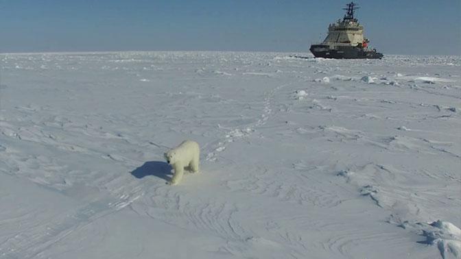 Бесконечная энергия: как и за счет чего Россия будет осваивать Арктику
