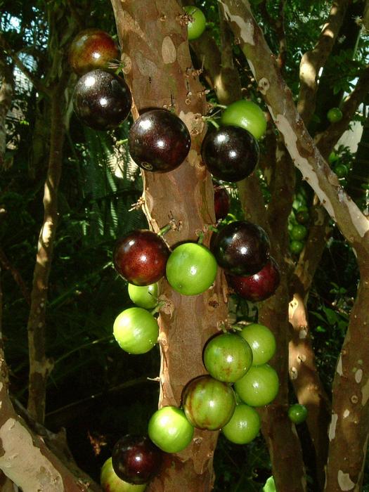 растения бразилии