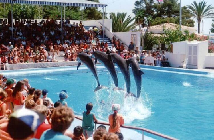 Шоу с дельфинами — радость д…