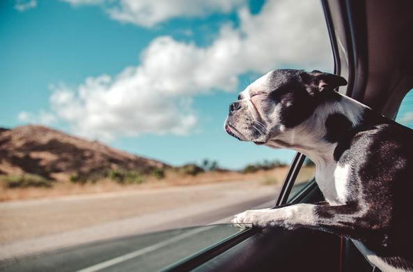Ученые узнали, как собаки видят мир