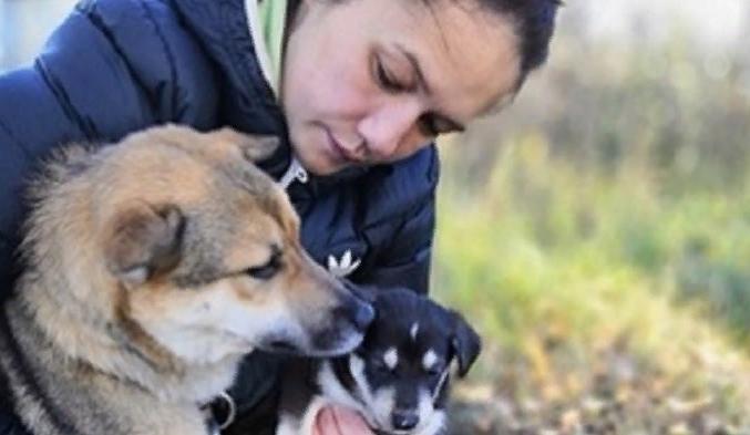 Живодеры бросили собачье семейство на съедение волкам в Карелии