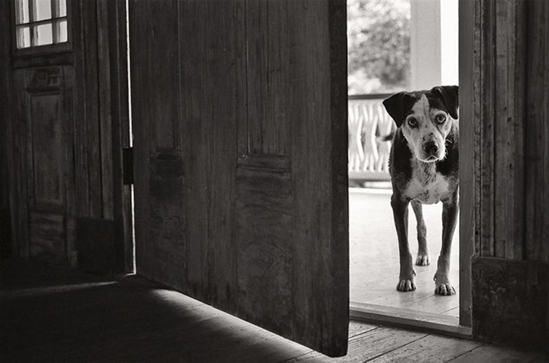 Уолли (14 лет) собаки, фото собак, фотографии животных