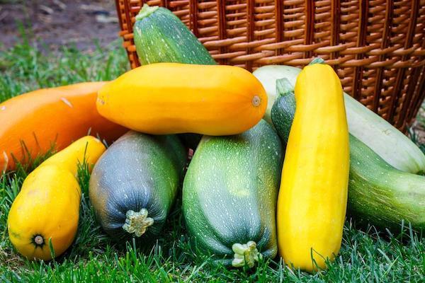 Почему кабачки не хотят плодиться