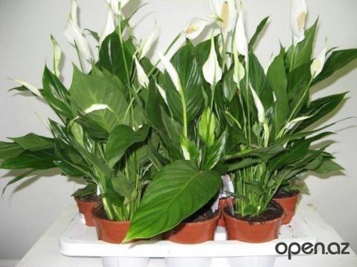 Комнатные растения нужно под…