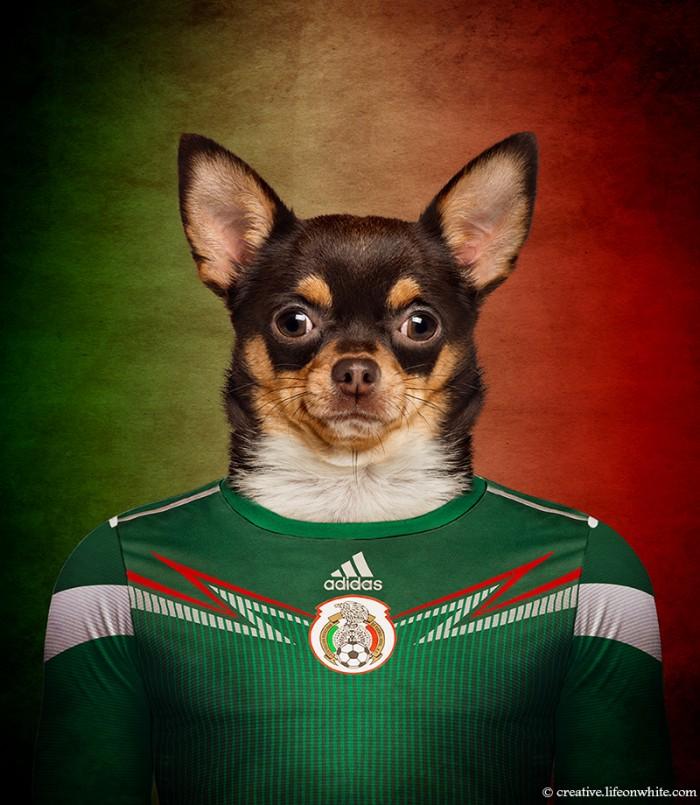 Собачья сборная мира