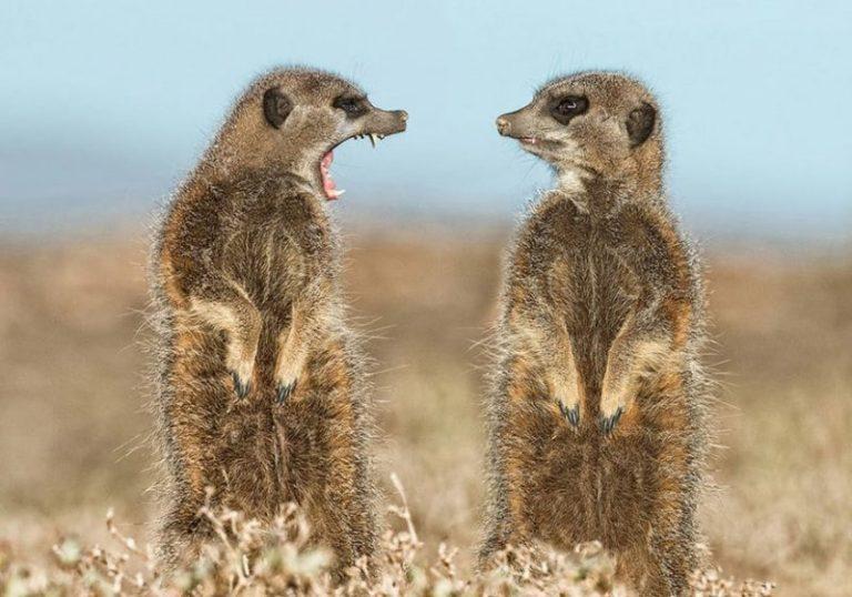 Снимки финалистов конкурса на самое смешное фото животных - нереальный позитив!