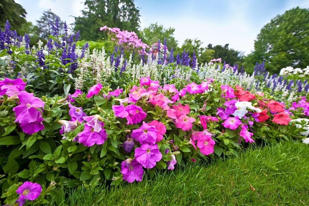 10 популярных цветов для солнечной клумбы