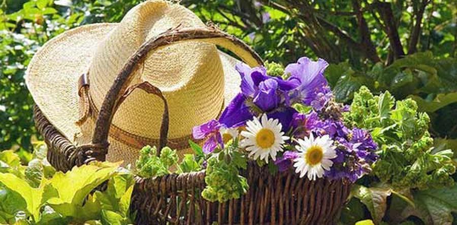 Интересные идеи для сада и огорода