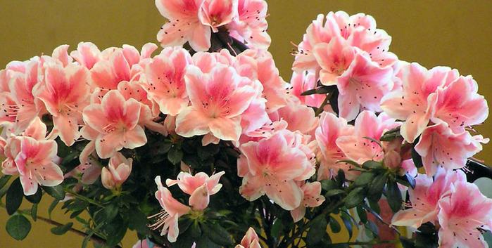 Комнатные цветы - Интересные фотографии - Ваш домик