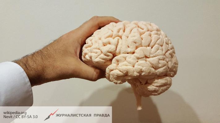 СМИ: мозг человека соединяется с черепом таинственными каналами