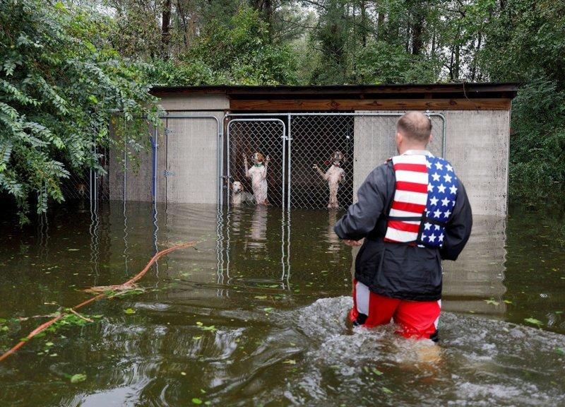 Волонтер спас собак, которые чуть не погибли от наводнения после урагана «Флоренс»