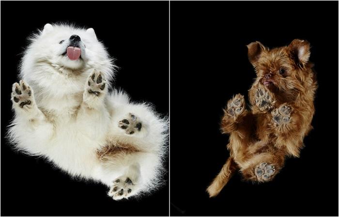 Забавные фотографии литовского фотографа, который снимает собак с неожиданного ракурса