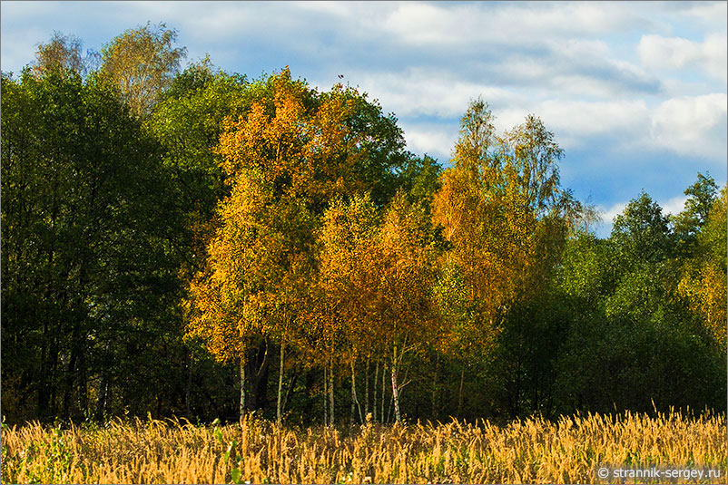 Поймать жар-птицу: охота за золотом осени
