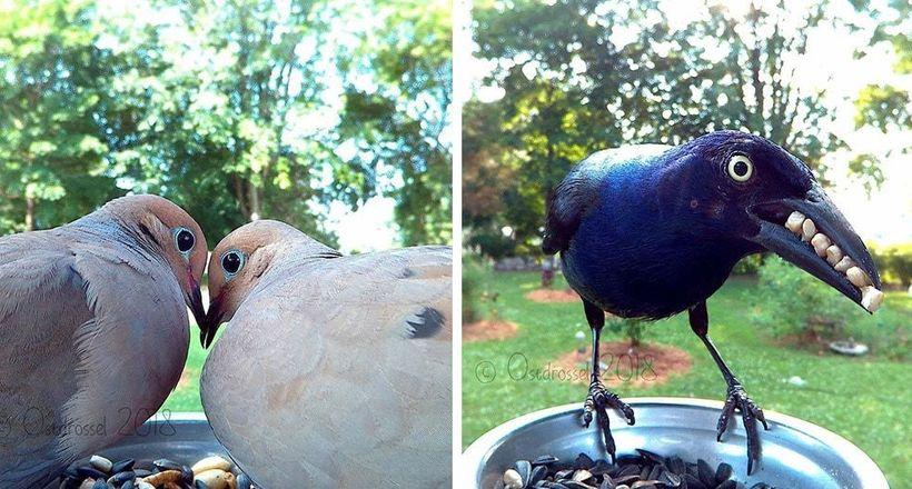 Камера на птичьей кормушке п…