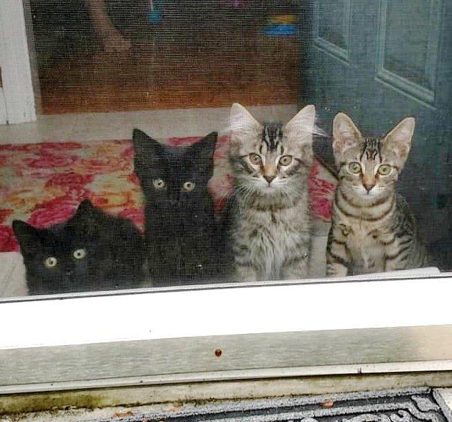 Супруги взяли на время четырех котят, но потом так и не смогли с ними расстаться