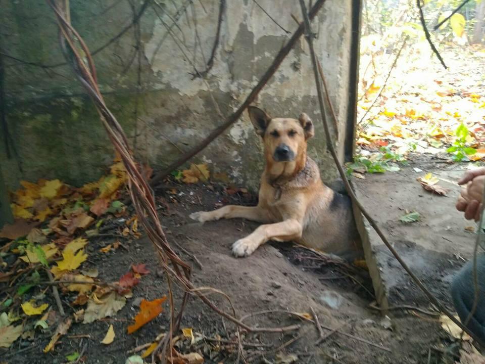 Она просто искала безопасное место… Собака застряла в бетоне, но неравнодушные супруги спасли бедняжку
