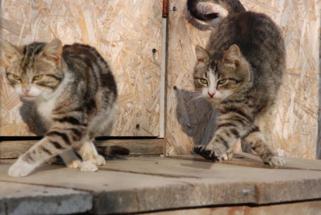 Улыбнитесь! Танцующие коты