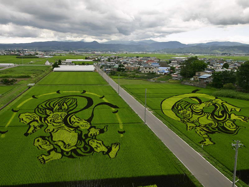 Фото дня: картины из риса на японских полях