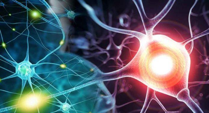 Вы можете блокировать рост раковых клеток, используя их метаболическую негибкость