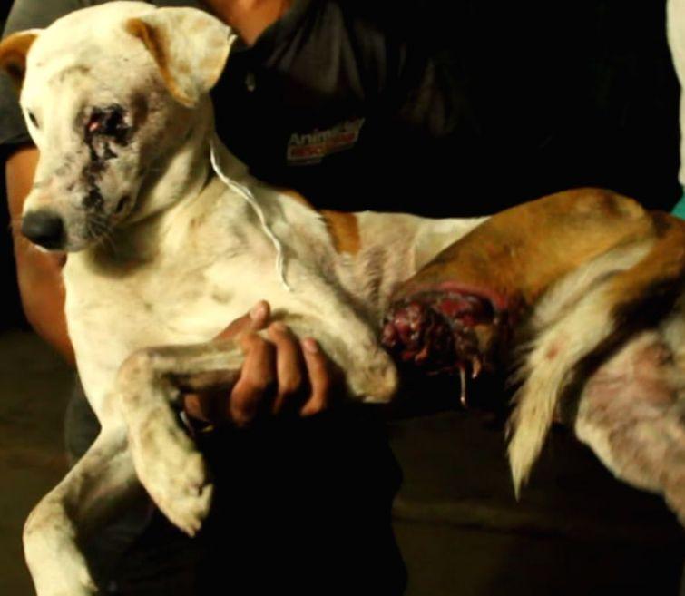 Искалеченная бродячая собака…
