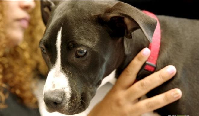 «Придется усыпить» — сказал врач женщине, отказываясь лечить собаку. И лишь позже стало понятно, почему