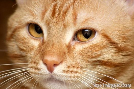 О чем Кошки знают, но не говорят ...