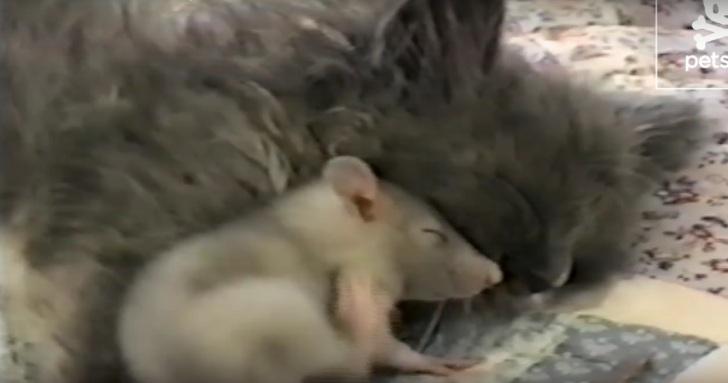 Персональный кот для мышки… …