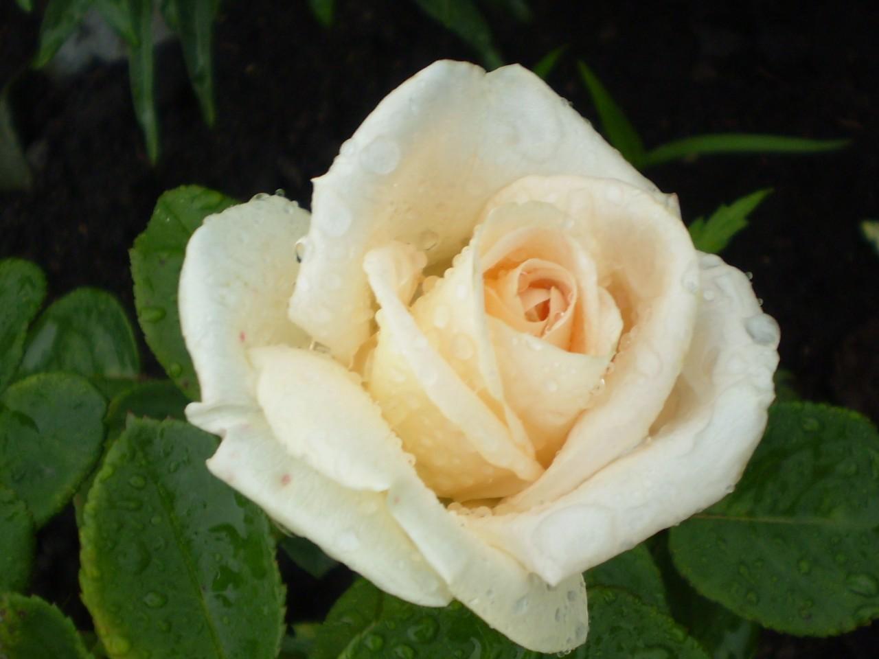Что повлияло на цветок?