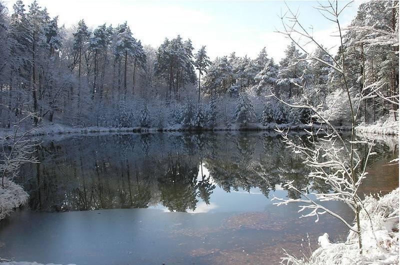 NewPix.ru - Красота лесного озера