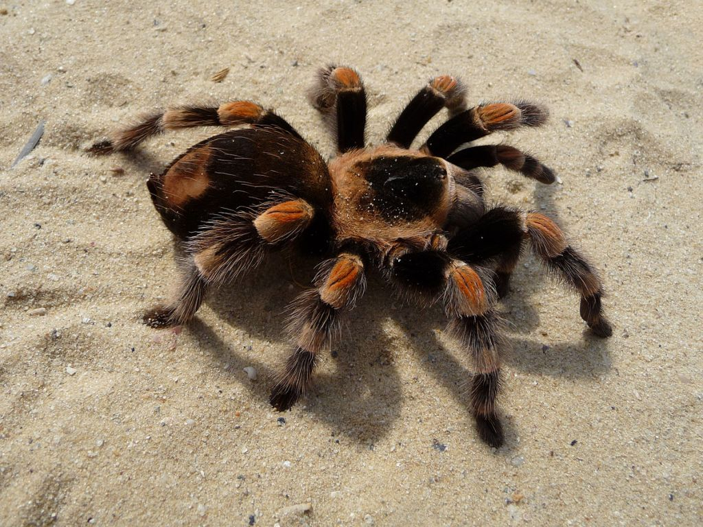 Приключения тарантула