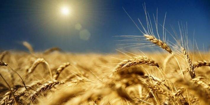 Экспорт российского зерна с начала 2017/18 маркетингового года вырос на 19%