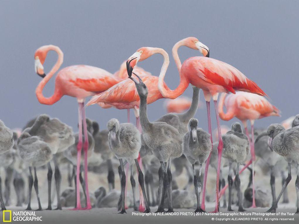 33 фотографии, которые журнал National Geographic назвал лучшими снимками дикой природы 2017