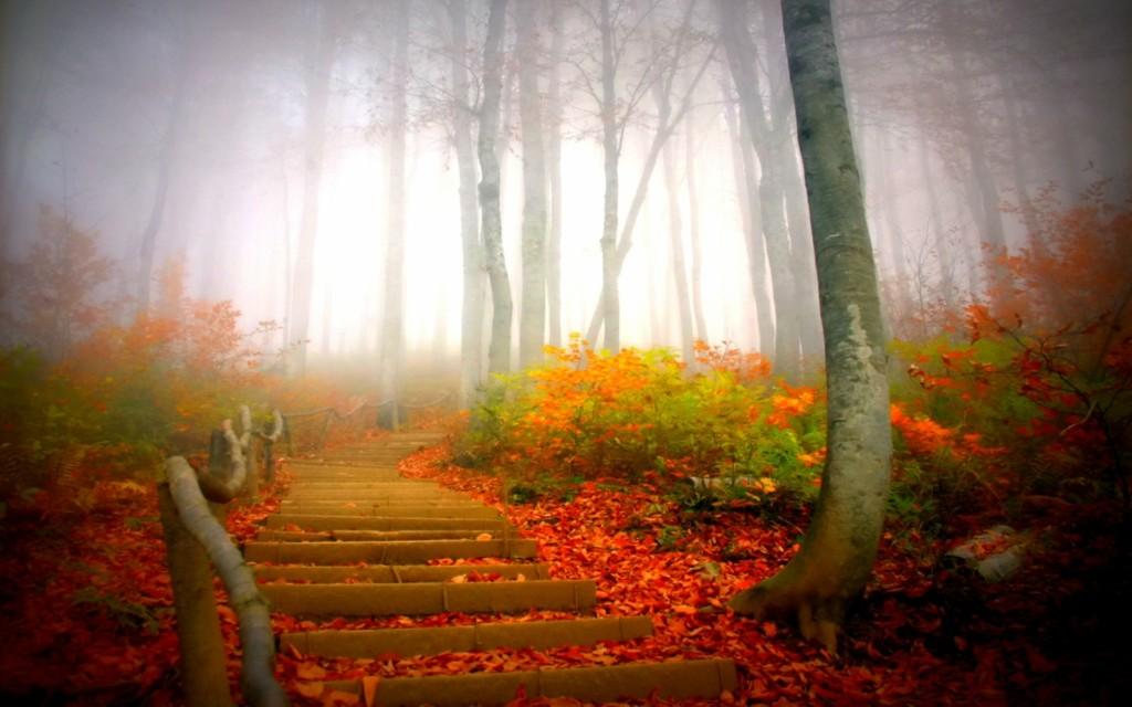 fall07 10 осенних фотографий, которые стали хитами в блогах