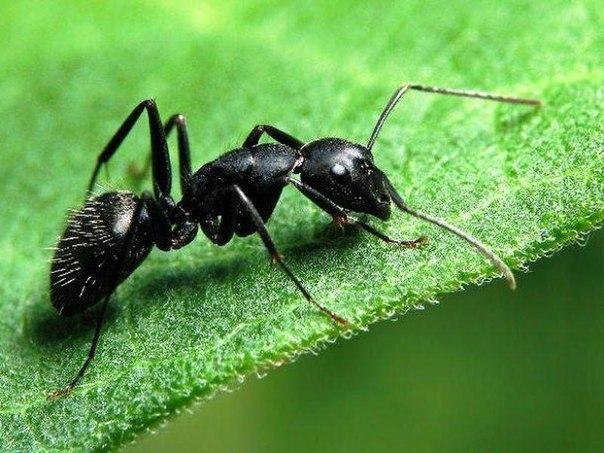 Удивительные факты про муравьёв