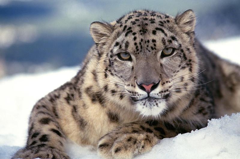 Самые редкие животные на Земле