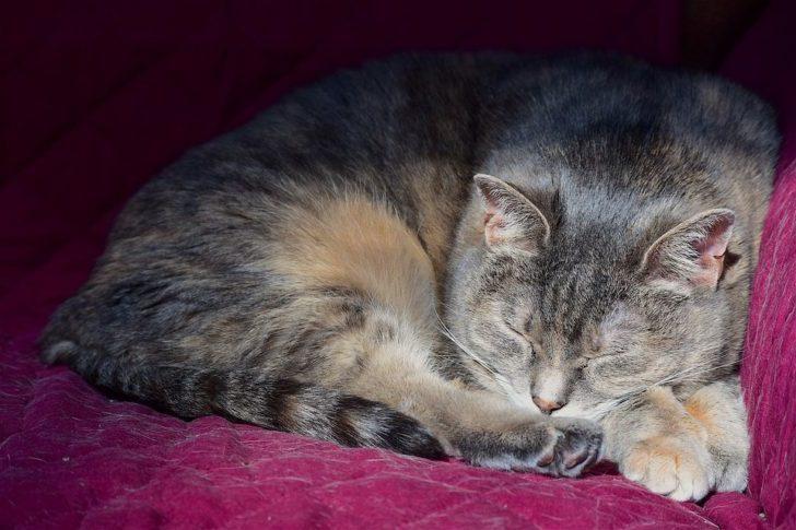 По-началу суровый, бездомный кот оказался тем еще неженкой