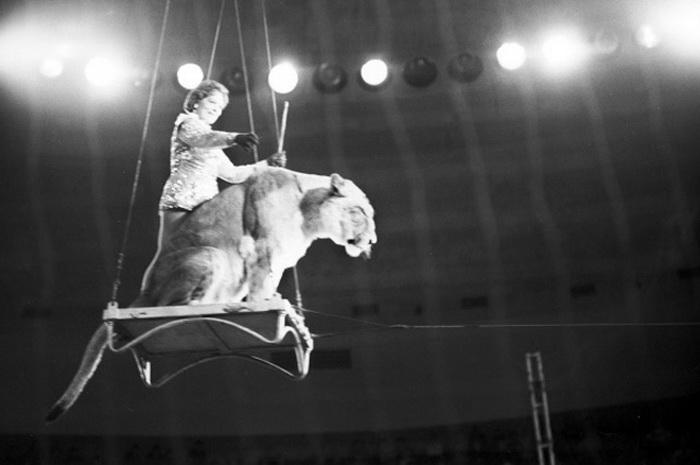 Фото делано во время выступления в Большом московском цирке на проспекте Вернадского | Фото: ria.ru