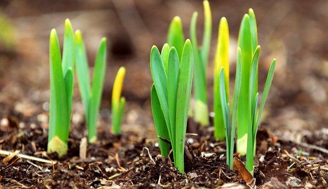 10 луковичных, которые надо посадить осенью