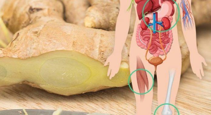 Если вы едите имбирь каждый день в течение 1 месяца, вот, что происходит с вашим телом